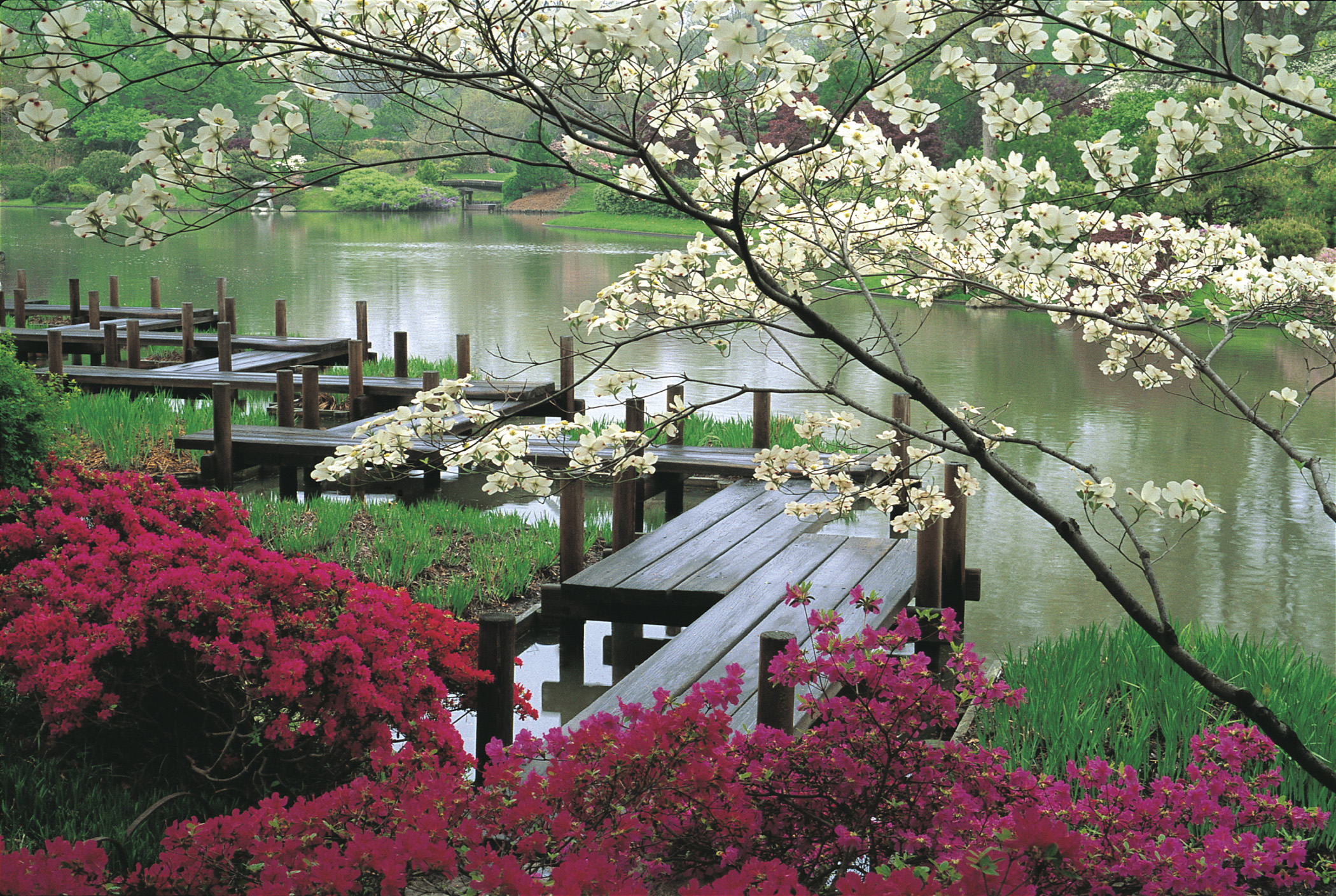 Japanese-garden-with-wooden-bridge-red-plants-and-tree-with-white-colors