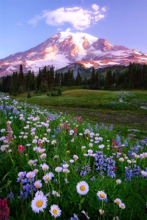 flowers and mountain e